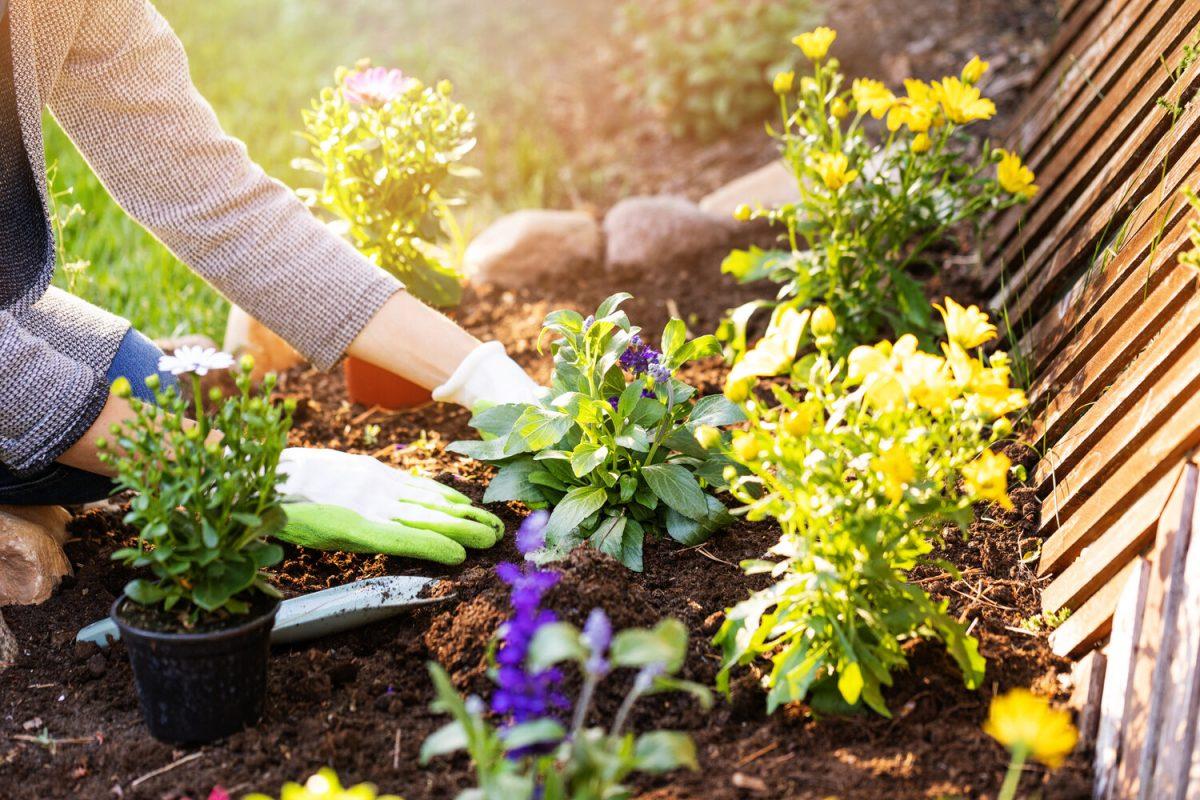 Basic Garden Shed Designs